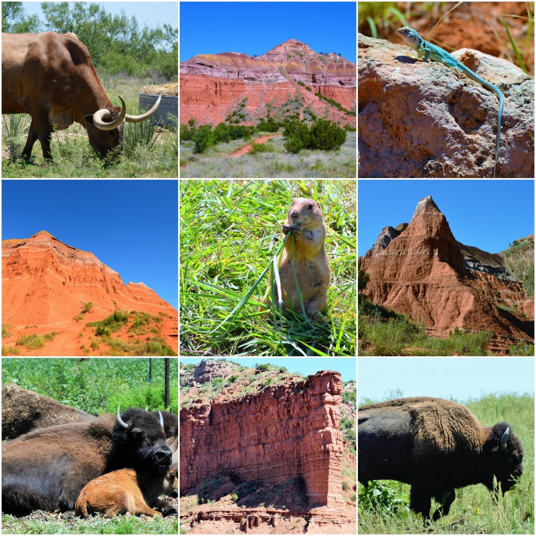 animals and caprock